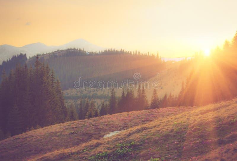 Paisaje hermoso de la montaña de la primavera en la salida del sol imagenes de archivo