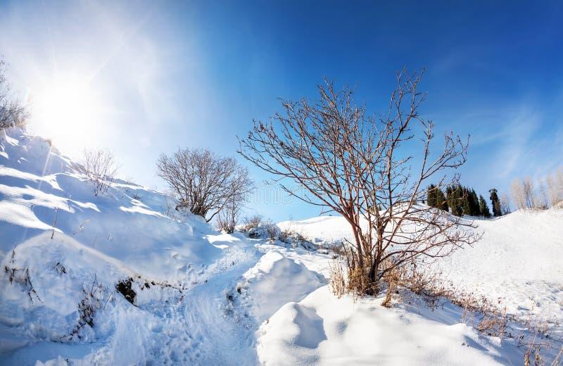 Paisaje hermoso de la montaña del invierno fotografía de archivo