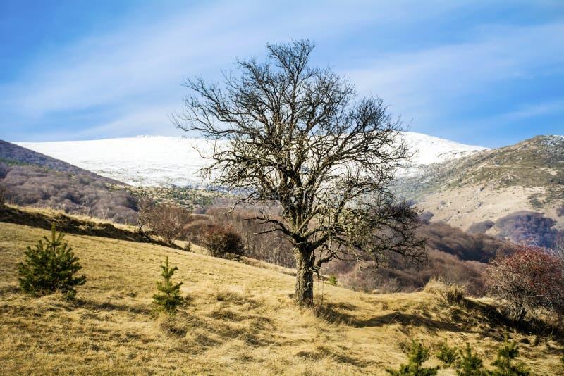 Paisaje hermoso de la montaña del invierno de Bulgaria imagen de archivo