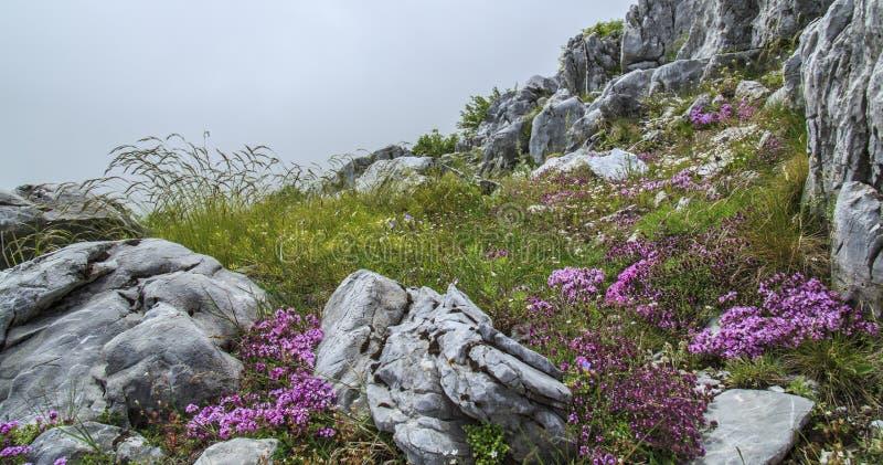 Download Paisaje Hermoso De La Montaña En Las Montañas Imagen de archivo - Imagen de limestone, hiking: 41917867