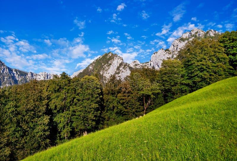 Paisaje hermoso de la naturaleza del verano en Baviera foto de archivo libre de regalías