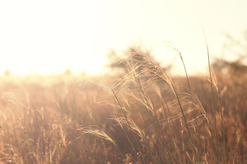 Paisaje hermoso de la pradera de la puesta del sol de la naturaleza Fondo Sunny Field salvaje fotos de archivo libres de regalías