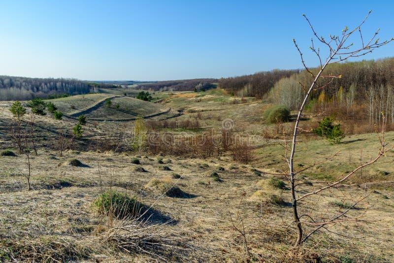 Paisaje hermoso de la primavera: árboles, bosque, montañas, colinas, campos, prados y cielo azul fotos de archivo libres de regalías