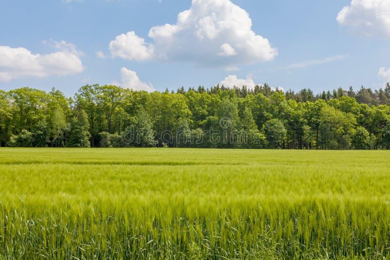 Paisaje hermoso de la primavera con el cielo azul foto de archivo libre de regalías