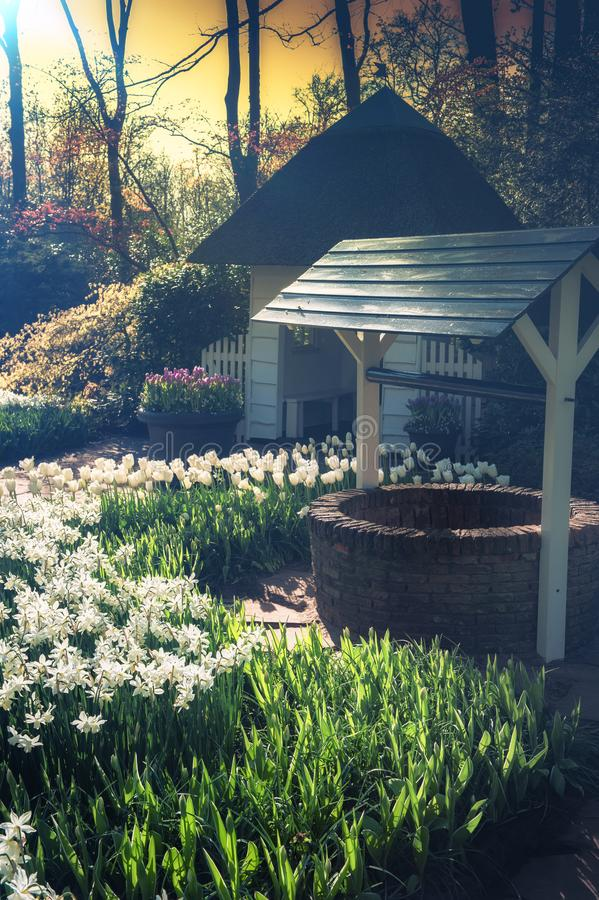 Paisaje hermoso de la primavera con los narcisos y los tulipanes blancos Natu fotografía de archivo libre de regalías