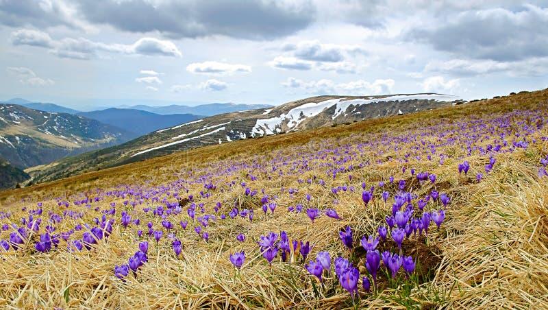 Paisaje hermoso de la primavera en Cárpatos, Ucrania imágenes de archivo libres de regalías