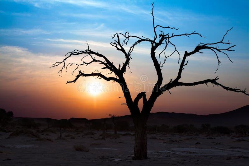 Paisaje hermoso de la puesta del sol, silueta seca de las ramas de árbol en el desierto en Sossusvlei, Namibia fotos de archivo libres de regalías