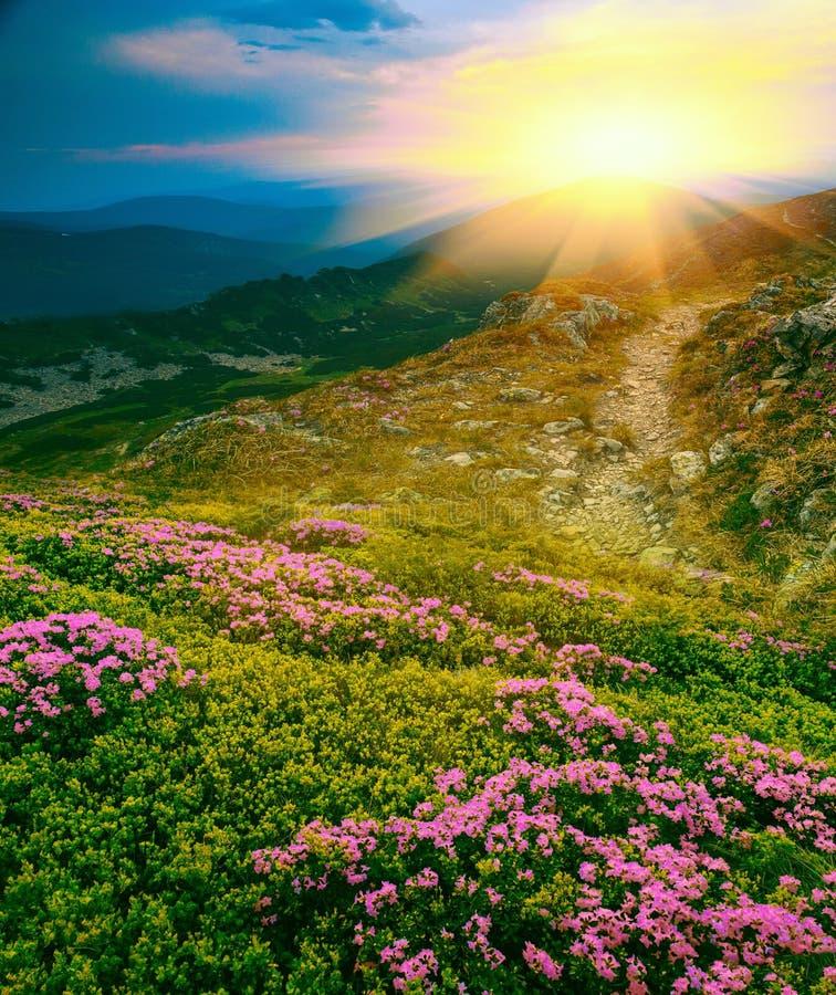 Paisaje hermoso de la salida del sol de Cárpatos del verano imagen de archivo libre de regalías