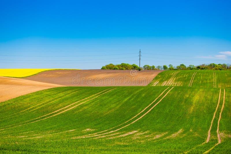 Paisaje hermoso de las tierras de labrant?o Colza, campos verdes en primavera fotografía de archivo