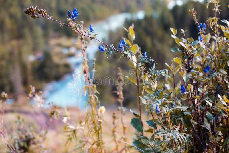 Paisaje hermoso de montañas y del lago imagen de archivo libre de regalías