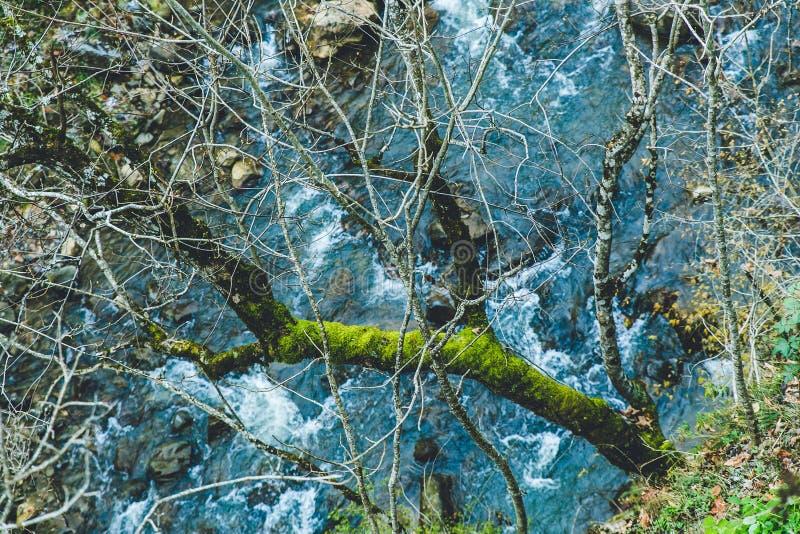 Paisaje hermoso de un bosque sobre un pequeño río limpio foto de archivo