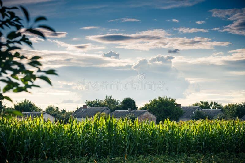 Paisaje hermoso de una granja del país rodeada por el maíz fotografía de archivo