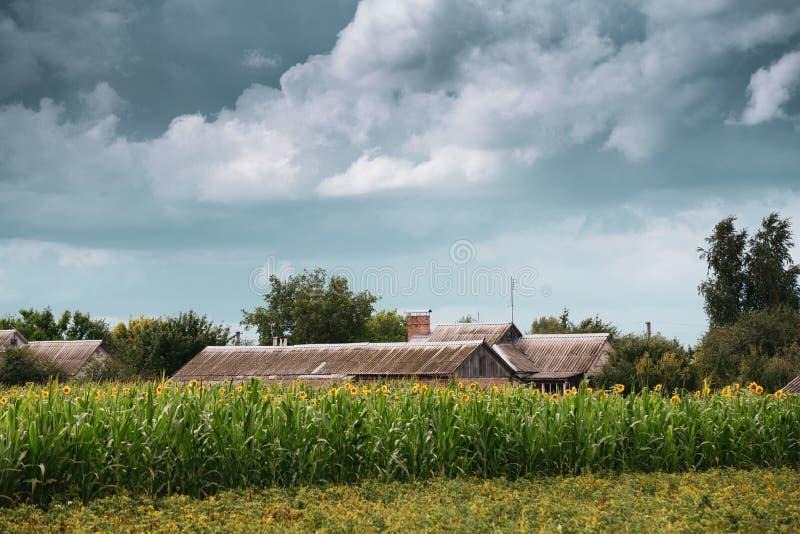 Paisaje hermoso de una granja del país rodeada por el maíz fotos de archivo libres de regalías