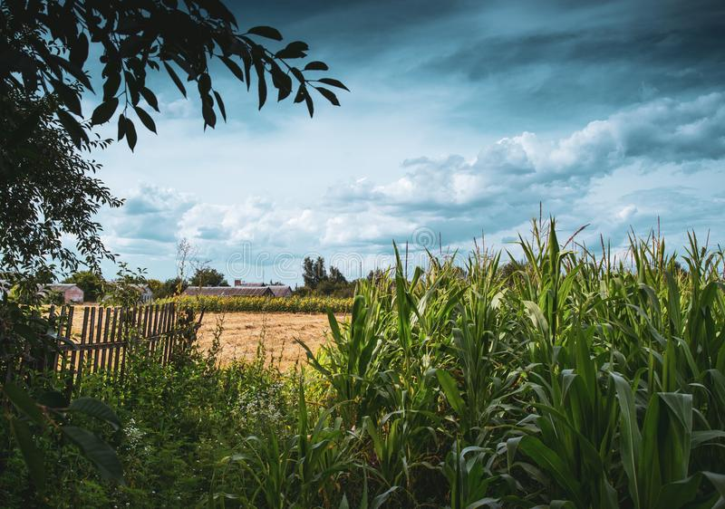 Paisaje hermoso de una granja del país rodeada por el maíz imagenes de archivo