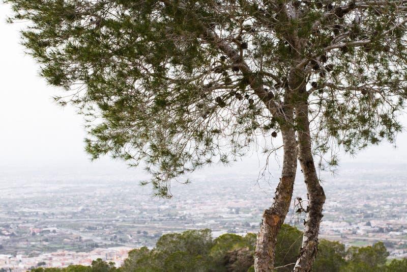 Paisaje hermoso del árbol fotos de archivo libres de regalías
