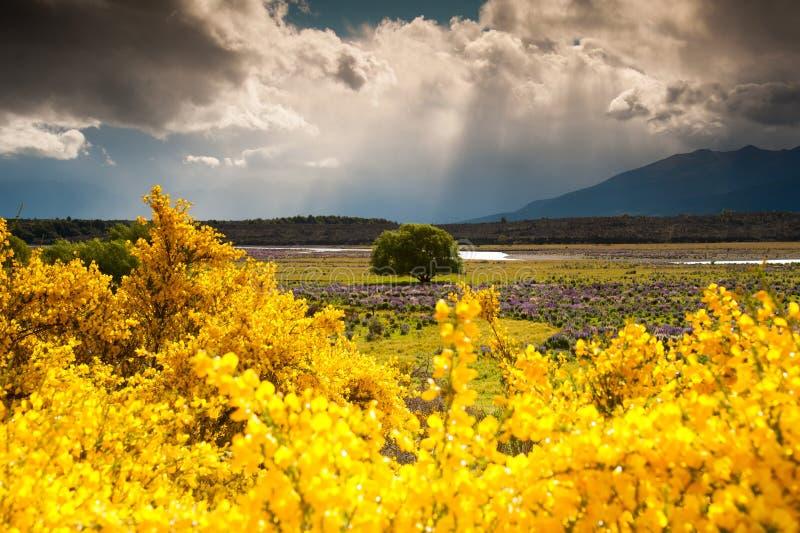 Paisaje hermoso en el jardín de flores, isla del sur, Nueva Zelanda imagenes de archivo