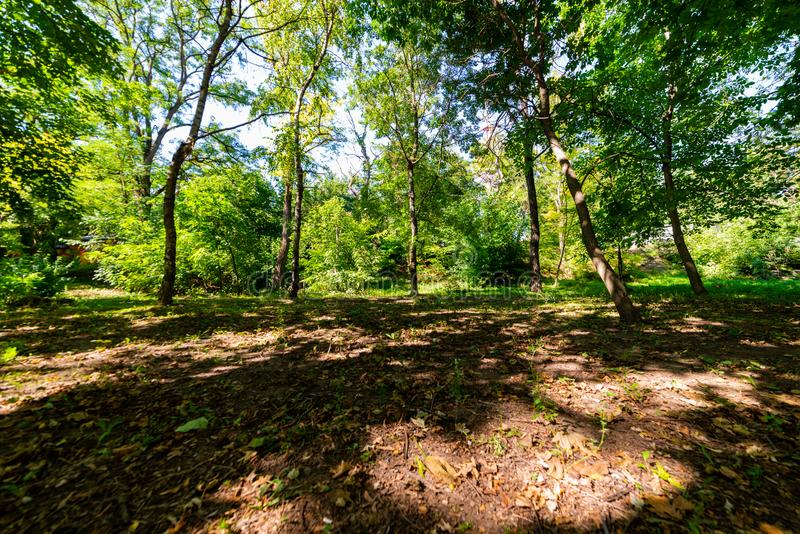 Paisaje hermoso del bosque Claro en el bosque o el parque imagen de archivo libre de regalías