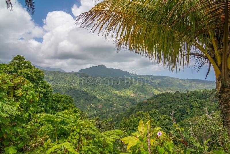 Paisaje hermoso del bosque de la montaña de Dominica tomado antes de la destrucción de Maria del huracán - isla de la naturaleza imagen de archivo