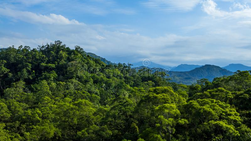 Paisaje hermoso del bosque de la montaña en Taiwán Vista elevada del paisaje de la naturaleza foto de archivo