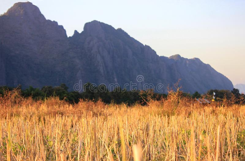 Paisaje hermoso del campo del riece en Vang Vieng, Laos foto de archivo