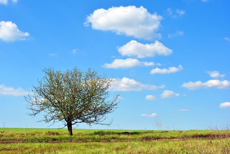 Paisaje hermoso del día soleado, cielo azul con los fluffyclouds blancos, manzano solo en prado imagenes de archivo
