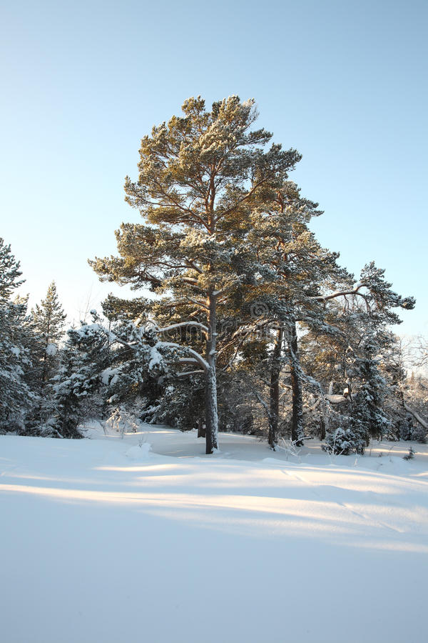 Paisaje hermoso del invierno imagen de archivo libre de regalías