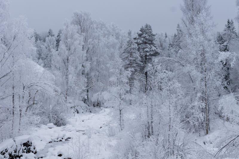 Paisaje hermoso del invierno con la helada gruesa que cubre los árboles imagen de archivo
