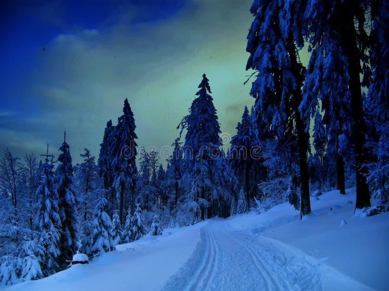 Paisaje hermoso del invierno con los árboles spruce nevados imágenes de archivo libres de regalías