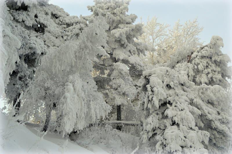 Paisaje hermoso del invierno en el bosque foto de archivo libre de regalías