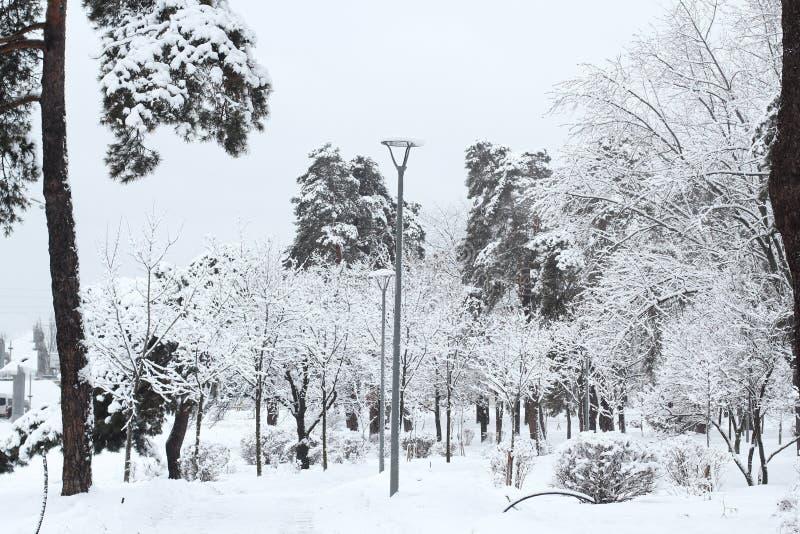Paisaje hermoso del invierno que sorprende con un árbol congelado grandes nevadas, árboles nevados en el parque imagen de archivo