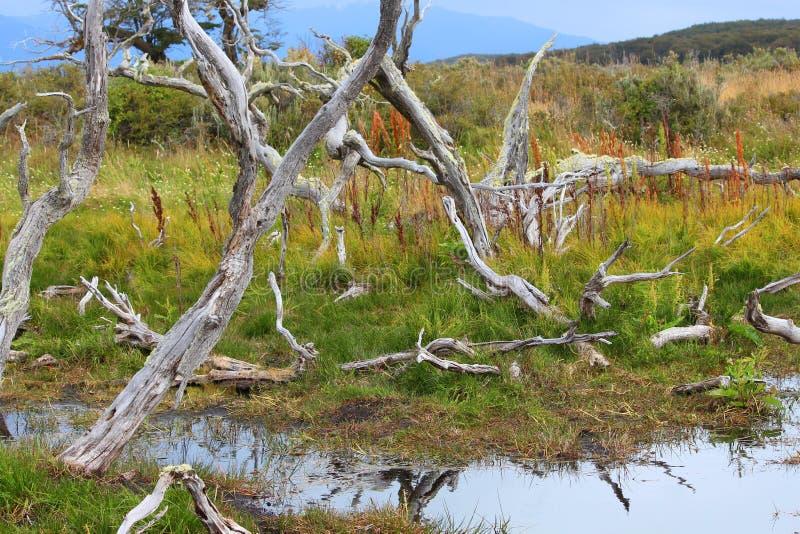 Paisaje hermoso del lago fotografía de archivo libre de regalías
