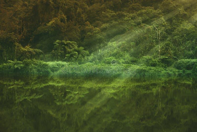 Paisaje hermoso del lago del bosque con el rayo de sol fotografía de archivo