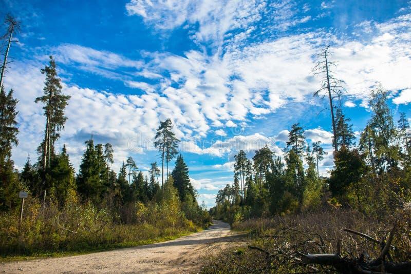 Paisaje hermoso del otoño Bosque mezclado colorido contra un cielo azul claro, con las nubes flotando en la distancia foto de archivo libre de regalías