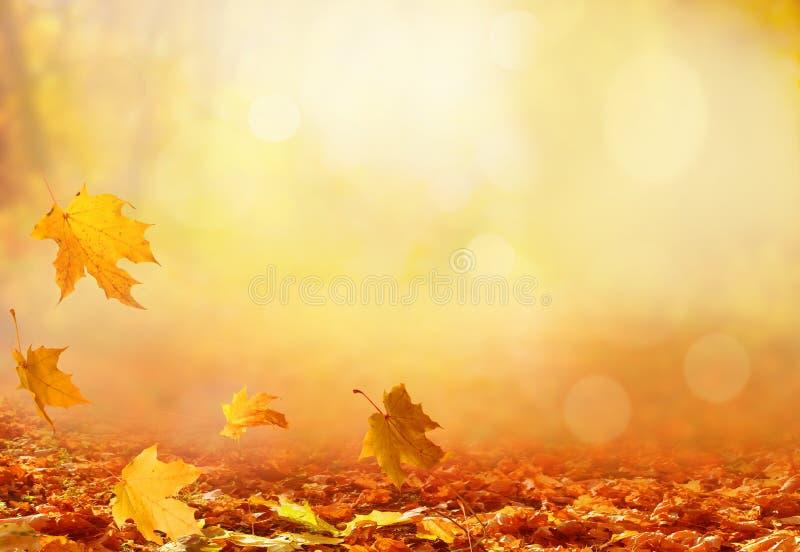 Paisaje hermoso del otoño con los árboles amarillos, el verde y el sol colo imagen de archivo libre de regalías