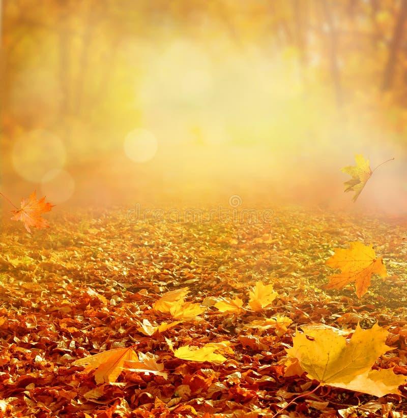 Paisaje hermoso del otoño con los árboles amarillos, el verde y el sol colo fotos de archivo