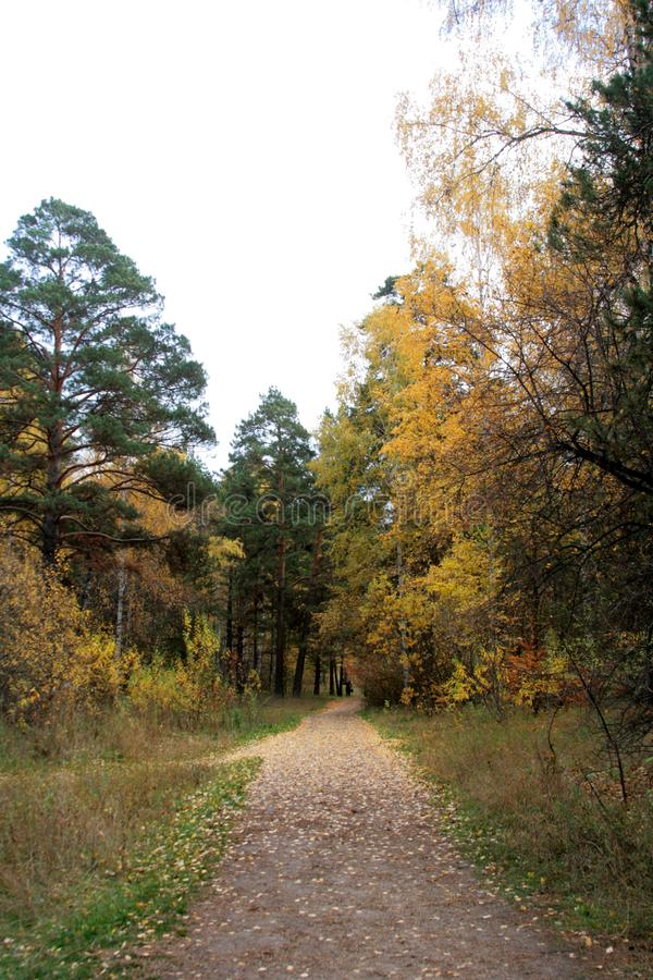 Paisaje hermoso del otoño en un día claro de septiembre en un bosque mezclado imagen de archivo libre de regalías
