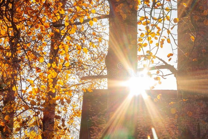 Paisaje hermoso del otoño - los rayos del sol poniente sobre el tejado de una casa del pueblo rodeada por los árboles del otoño fotografía de archivo