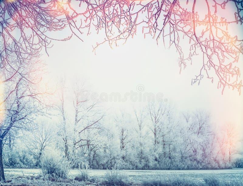 Paisaje hermoso del país del invierno con los árboles y el marco de la nieve fotografía de archivo libre de regalías
