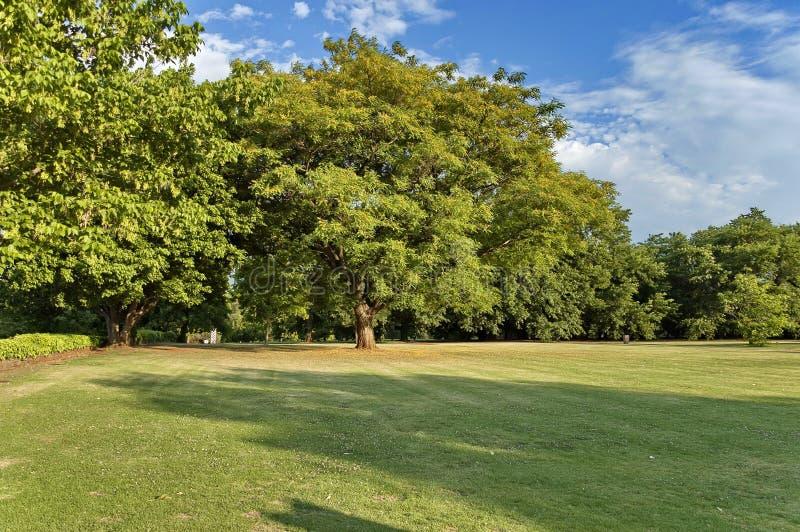 Paisaje hermoso del parque de Emmarentia fotografía de archivo