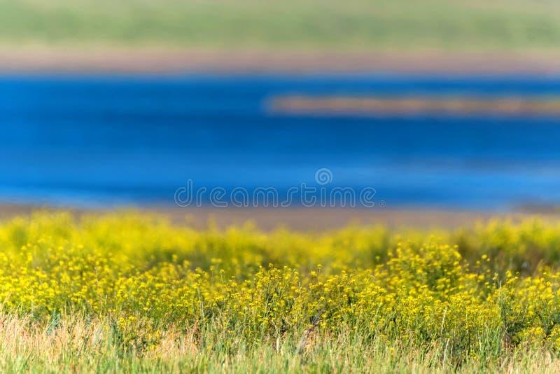Paisaje hermoso del verano con las flores y el río foto de archivo libre de regalías