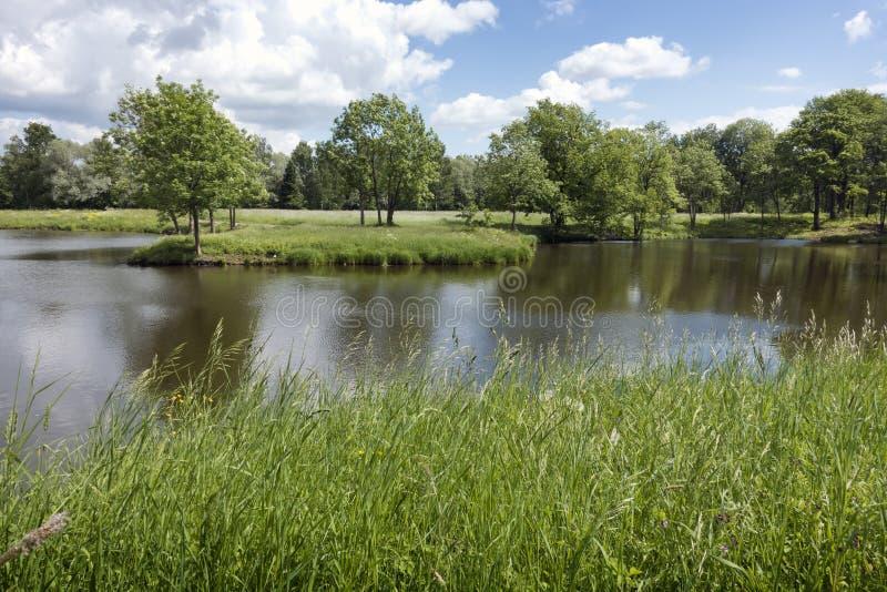 Paisaje hermoso del verano con los árboles en la orilla del río, un prado y la madera en el horizonte fotografía de archivo libre de regalías