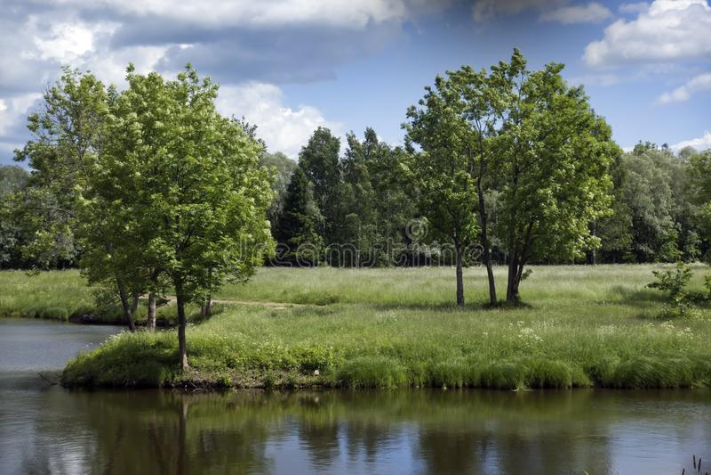 Paisaje hermoso del verano con los árboles en la orilla del río, un prado y la madera en el horizonte imagen de archivo