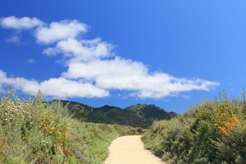 Paisaje hermoso del verano en las montañas con las flores amarillas fotos de archivo