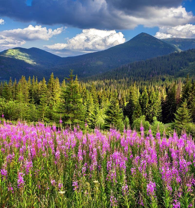 Paisaje hermoso del verano en montañas con las flores rosadas imágenes de archivo libres de regalías
