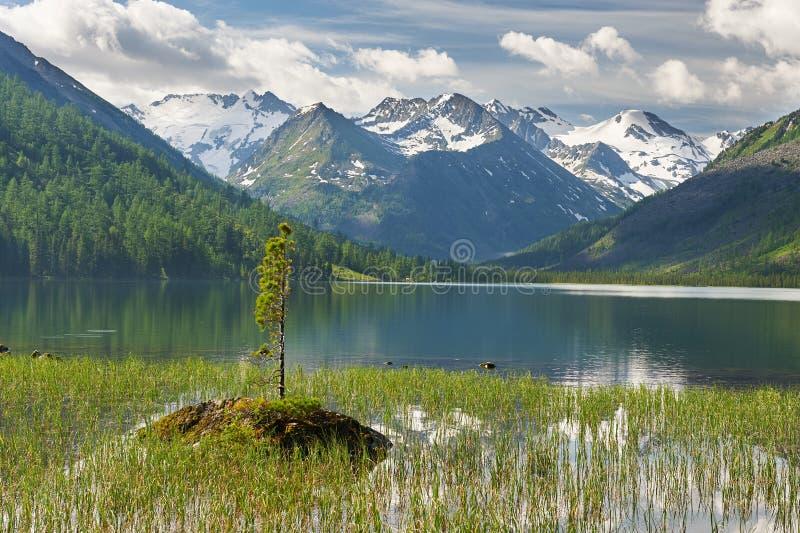 Paisaje hermoso del verano, montañas Rusia de Altai imagen de archivo libre de regalías