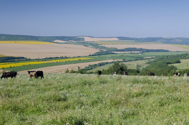 Paisaje hermoso en Bulgaria septentrional fotografía de archivo
