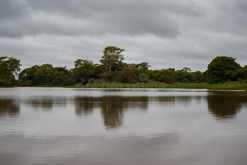 Paisaje hermoso en Pantanal septentrional imágenes de archivo libres de regalías