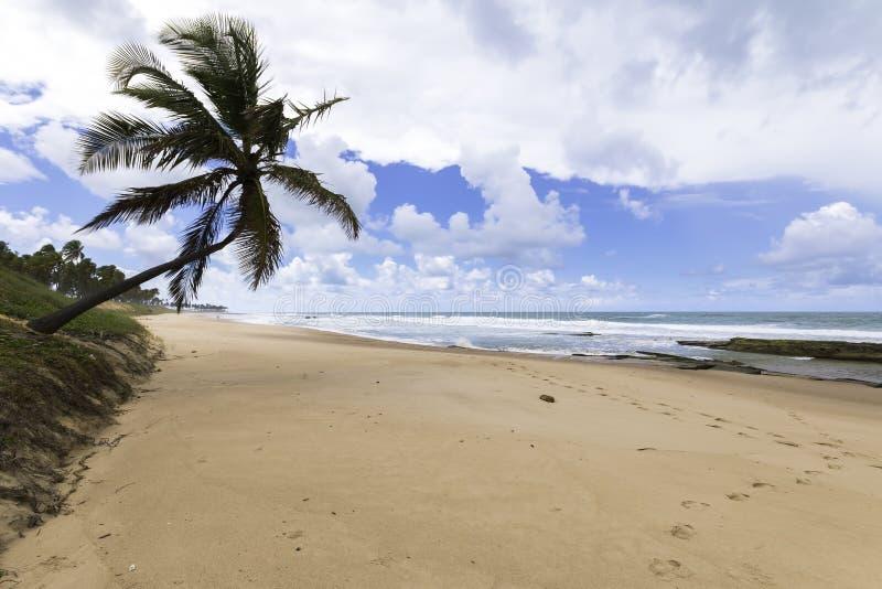 Paisaje hermoso en playa del paraíso con el coco solitario en Bahia Brazil imagen de archivo libre de regalías