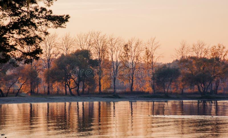 Paisaje hermoso, pájaros y puesta del sol del lago Ondas, línea del horizonte y árboles rosados de oro en el agua fotos de archivo