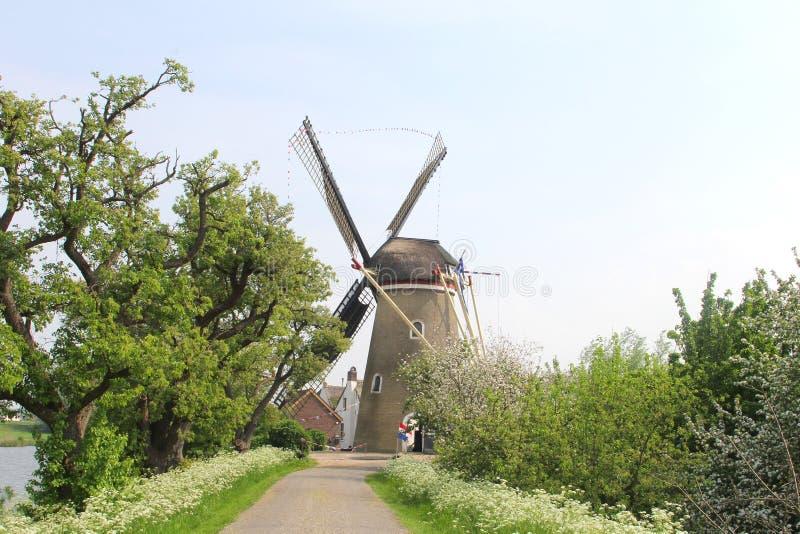 Paisaje holandés con el molino de viento tradicional del maíz y foto de archivo